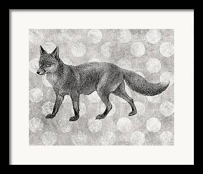Gray Fox Framed Prints