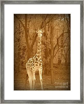 Vintage Giraffe Framed Print by Avis  Noelle