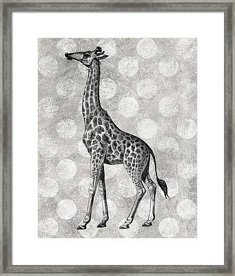 Gray Giraffe Framed Print by Flo Karp