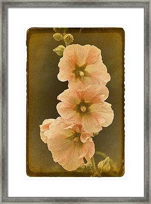 Vintage Hollyhock No. 2 Framed Print