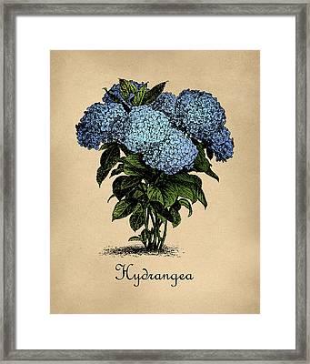 Vintage Hydrangeas Botanical Framed Print
