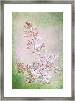 Vintage Lilac Framed Print by Kathi Mirto
