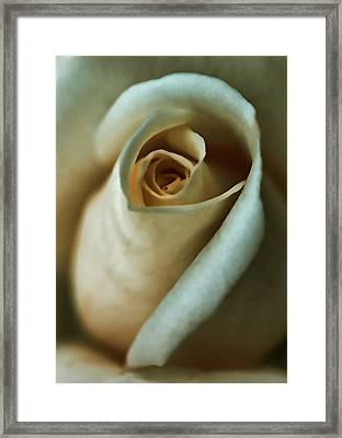 Vintage Macro Rose Flower Framed Print by Jennie Marie Schell