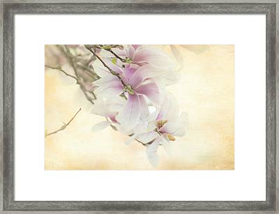 Vintage Magnolia Framed Print by Tracy Munson