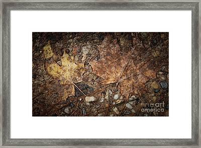 Vintage Maple Leaf Framed Print by Jolanta Meskauskiene