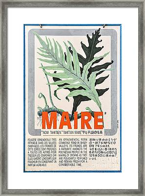 Vintage Market Sign 1 - Papeete - Tahiti - Maire - Fern Framed Print by Ian Monk
