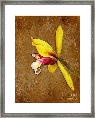 Vintage Orchid Framed Print by Judi Bagwell
