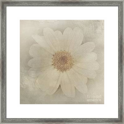 Vintage Painterly White Daisy  Framed Print