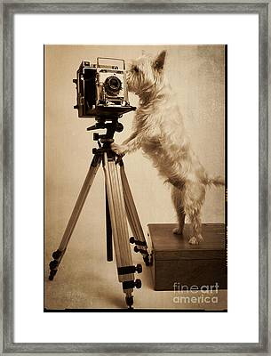 Vintage Pho Dog Grapher Westie Framed Print by Edward Fielding