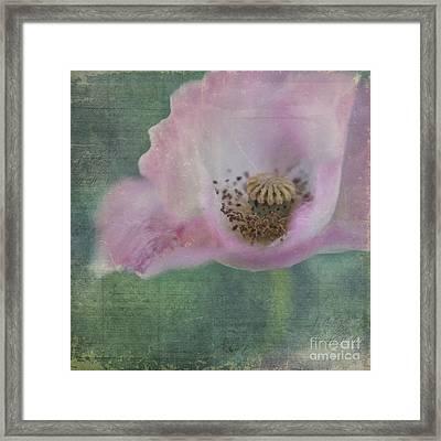 Vintage Poppy Framed Print by Priska Wettstein