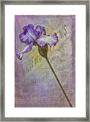 Vintage Pourpre Iris Framed Print by Chanin Green
