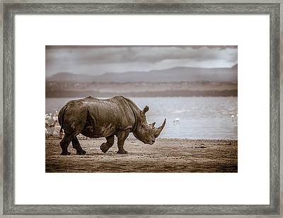 Framed Print featuring the photograph Vintage Rhino On The Shore by Mike Gaudaur