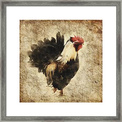 Vintage Rooster Framed Print by Georgiana Romanovna
