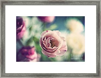 Vintage Rose Framed Print by Catherine MacBride