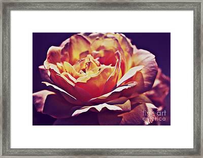 Vintage Rose Framed Print by Judy Palkimas