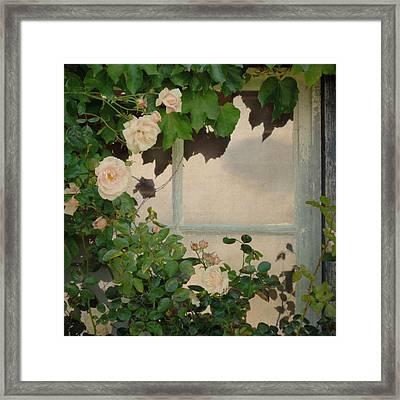 Vintage Rose Framed Print by Sally Banfill