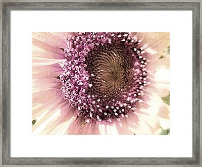 Vintage Sunflower  Framed Print by Marianna Mills