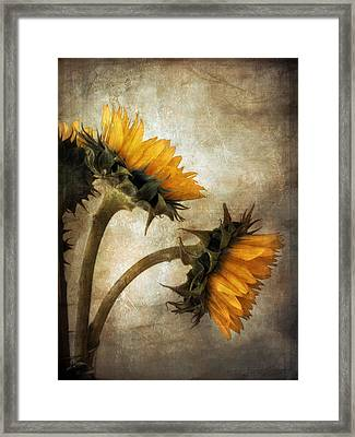 Vintage Sunflowers Framed Print