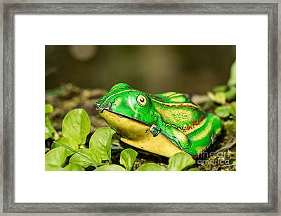 Vintage Tin Toy Frog Sitting In The Grass Framed Print