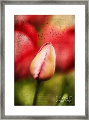 Vintage Tulip Framed Print by Darren Fisher