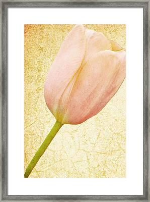Vintage Tulip Framed Print by Lesley Rigg