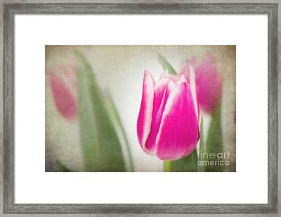 Vintage Tulips Framed Print by Jane Rix
