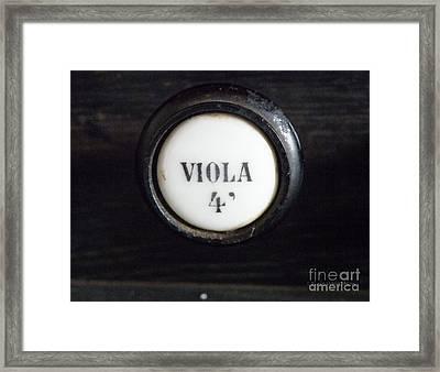 Viola Framed Print