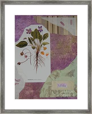 Viola Framed Print by Tamyra Crossley