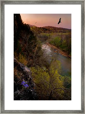 Violet And Vultures Framed Print by Robert Charity