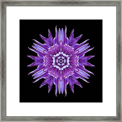 Violet Chrysanthemum Iv Flower Mandala Framed Print by David J Bookbinder