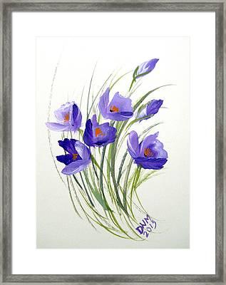 Violet Crocus Framed Print by Dorothy Maier