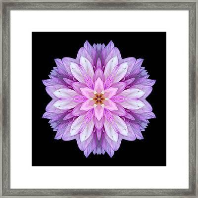 Violet Dahlia I Flower Mandala Framed Print