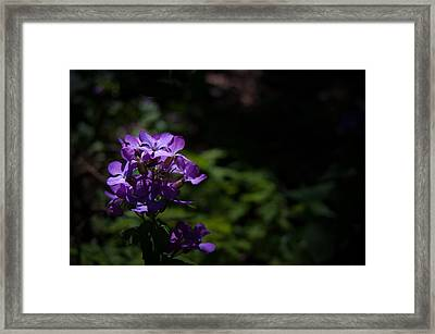 Violet Eyes Framed Print