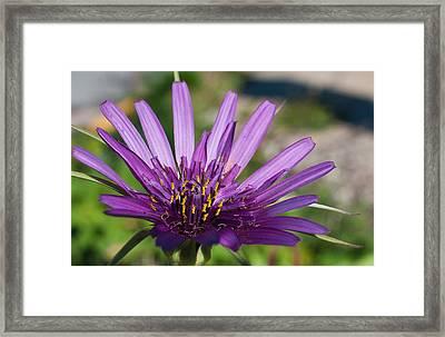 Violet Flower Framed Print by Carlos V Bidart