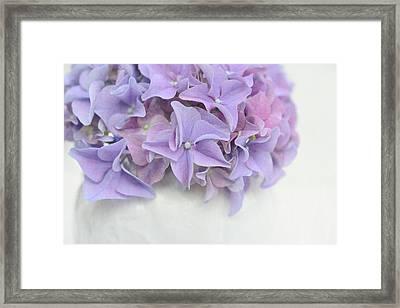 Violet Hydrangea Framed Print by Cora Niele