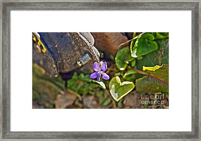 Violet In The Rust Framed Print by Crystal Harman