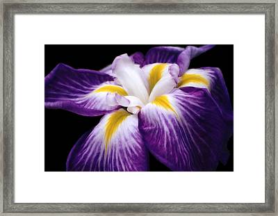 Framed Print featuring the digital art Violet Iris by Bruce Rolff