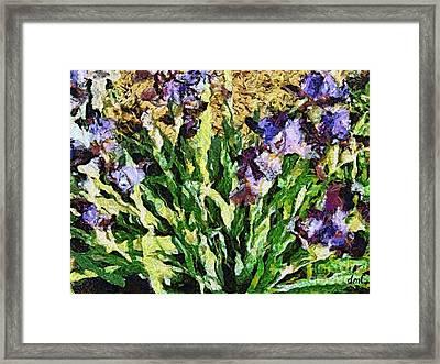 Violet Irises Framed Print