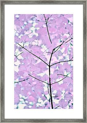 Violet Lavender Leaves Melody Framed Print by Jennie Marie Schell