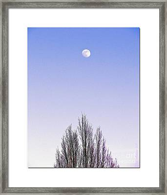 Framed Print featuring the photograph Violet Moon And Treetop by Chris Anderson