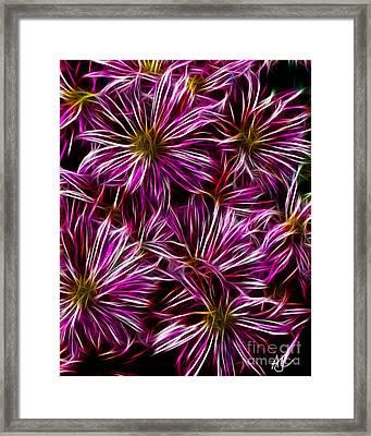Violet Mums Framed Print by Amanda Collins