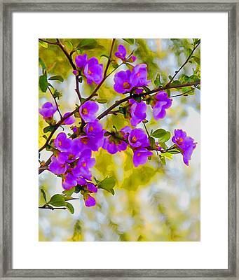 Violet Quince Framed Print by Curtis Stein