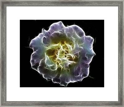 Violet Rose Digital Painting Framed Print by Georgeta Blanaru