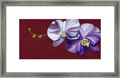 Violet Shadows Framed Print