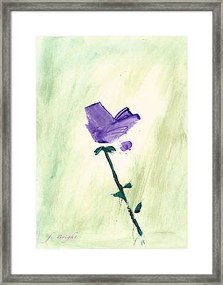 Violet Solo Framed Print by Frank Bright
