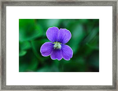 Violet Splendor Framed Print by Julie Andel