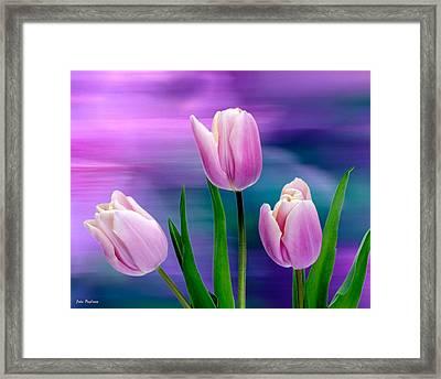 Violet Tulips Framed Print