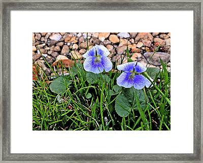 Violet Two Framed Print by Larry Bishop