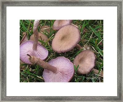 Violet Waxcaps Framed Print