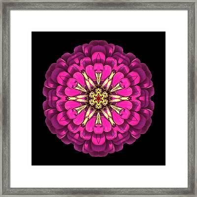 Violet Zinnia Elegans Flower Mandala Framed Print by David J Bookbinder